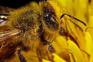 Pollen Duster By Dalantech On Deviantart