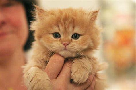 canapé le bon coin cherche recherche chaton à adopté gratuit 92400