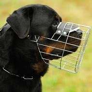 Hund Frisst Steine by Rottweiler Negozio Cani Accessori Per Cani