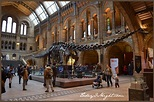 London's Natural History Museum - Today I Might...