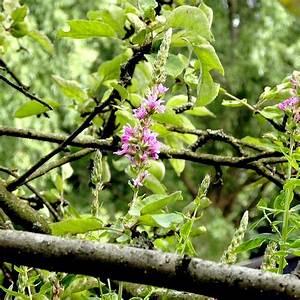 Was Blüht Jetzt Im Garten : was bl ht bei euch gerade auf dem balkon im garten co ~ Lizthompson.info Haus und Dekorationen