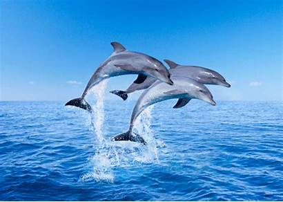 Dolphins Dolphin Jumping Postcard Bottlenose Card Making