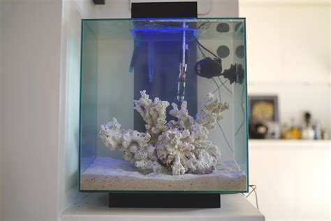Nano Reef  Fluval Edge 2  Oops!  Justin Fox