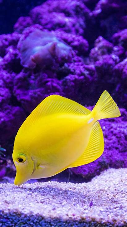 Fish Tropical Wallpapers 4k Mobile Fishes Animal
