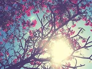 flowers-tumblr - Flowers Photo (33623873) - Fanpop