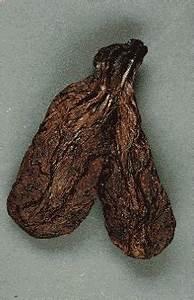 Настойка бобровой струи при геморрое