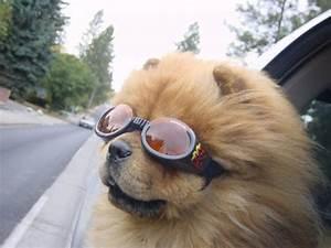 Gafas de sol para perros, protege a tu mascota de los rayos del sol Blickers