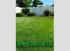 Quiet CornerBermuda Grass Lawn Care Quiet Corner