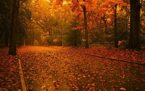 20 Beautiful Autumn Wallpapers To Spice Up Your Desktop