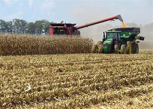 Rainy weather slows state's corn harvest | Mississippi ...