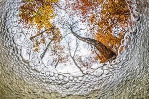 Fish-eye view | Theo Bosboom | Creative Visions | Wildlife ...