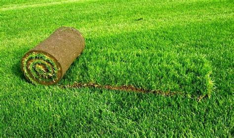 How To Buy The Best Artificial Grass