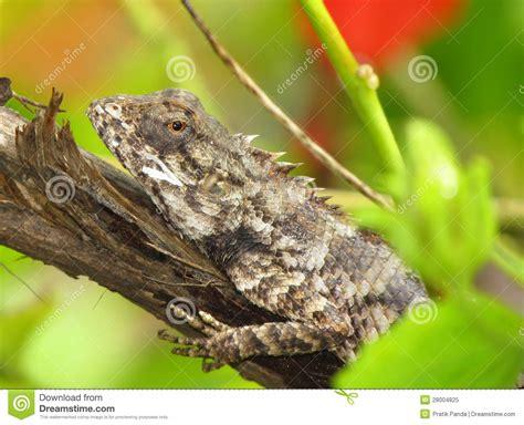 camaleonte o lucertola del giardino che basking sul ceppo