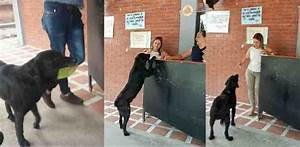 Clever Dog Always Brings a Leaf to 'Buy' Himself Treats at ...