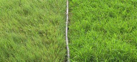 Texas Native Grass Mix (buffalograss, Blue Grama, And