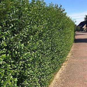 Garten Hecken Immergrn Gartengestaltung Ralf Poerschke
