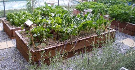 raised organic garden beds