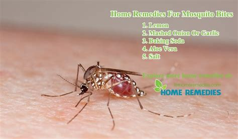 25+ Best Ideas About Remedies For Mosquito Bites On Candy Craft Ideas For Christmas Easy Ornament Crafts Kids Adults Gifts Edible Family Toilet Paper Tube Sweden Bulb