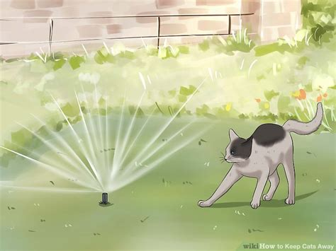 how to keep cats away how to keep cats away 9 steps with pictures wikihow