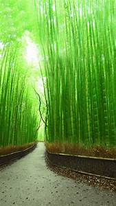 Download Bamboo Forest Kyoto Japan Wallpaper for desktop
