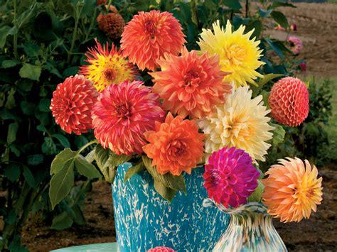 dahlia flower arrangements dazzling dahlia flower arrangements southern living