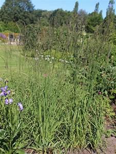 Gräser Für Den Garten : die besten 25 pfeifengras ideen auf pinterest ziergr ser sorten gr ser f r den garten und ~ Sanjose-hotels-ca.com Haus und Dekorationen