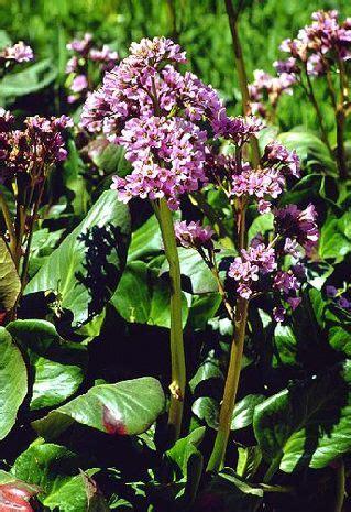 pflanzen fuer saure boeden der bio gaertner