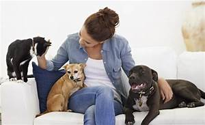 Pet sitting is it right for your dog australian dog lover for Puppy dog sitter