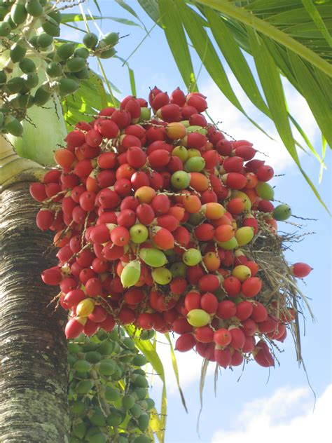 Tobago Food Uncovered  Part 1  Tan Rosie Caribbean Food Blog