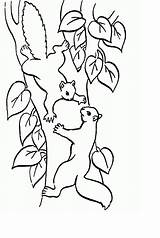Squirrel Coloring Pages Printable Print Animal Place Animalplace sketch template