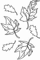 Toamna Colorat Planse Desene Coloring Cu Imagini Fise Despre Leaves Fall Autumn Cibosteca Alcool Familycrafts Generator Romanesc sketch template
