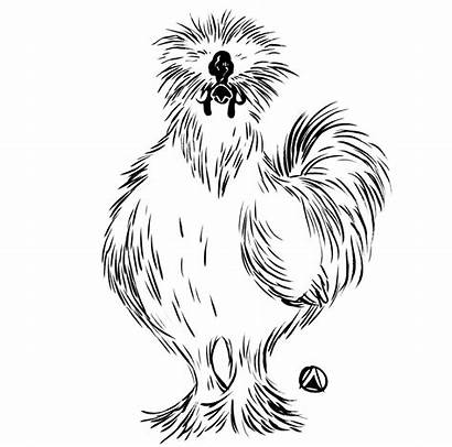 Silkie Chicken Drawing Chickens Salad Kale Drawings