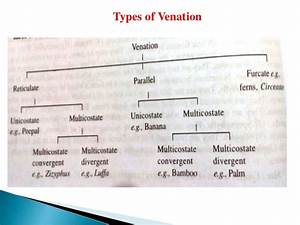 Leaf structure, adaptations, development