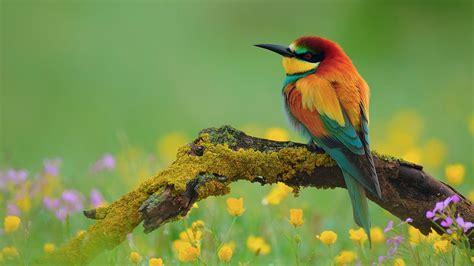 bird wallpaper colorful hd desktop wallpapers  hd