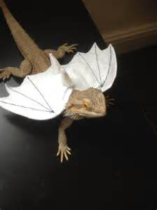 Bearded Dragon Clothes