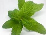 Fresh Mint – Peppermint Jim