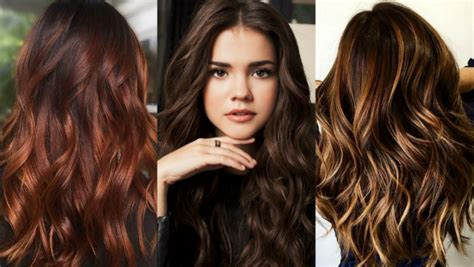 brown hair colors  show  hairstylist  dyeing