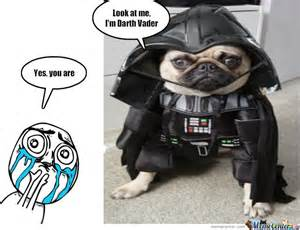 wars names for cats darth puppy by serkan meme center