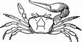 Fiddler Cliparts Library Clipart Clip sketch template
