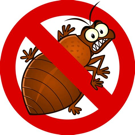 box springs bed bug treatments exclusive pest charleston sc