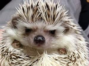 10 of the grumpiest animals of all time
