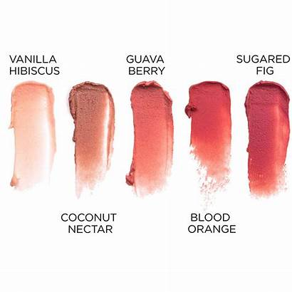 Lip Tint Pacifica Quench Fig Swatches Colour