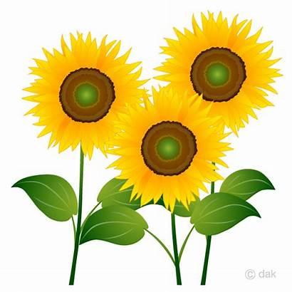Sunflowers Clipart Sunflower Clip Transparent Background