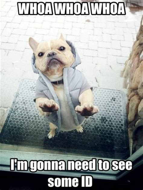 Cute No Meme - dog funny animal quotes quotesgram