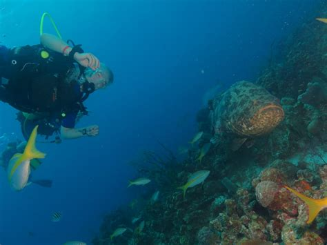 grouper diving goliath wall