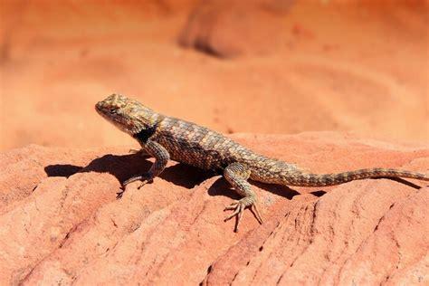 lizards  joy  animals