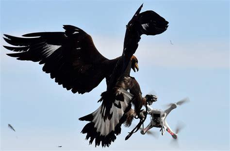 l arm 233 e fran 231 aise enr 244 le des aigles pour combattre les drones la croix