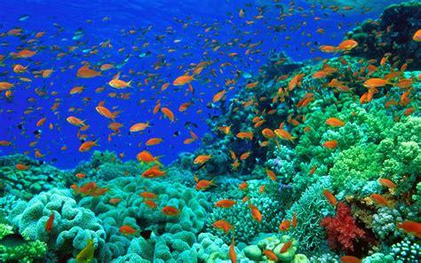 wallpaper bawah laut terbaru  terindah bangiz
