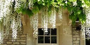 Plante Grimpante Pergola : les glycines en d co de jardin comment entretenir la plante et en d corer son ext rieur ~ Nature-et-papiers.com Idées de Décoration