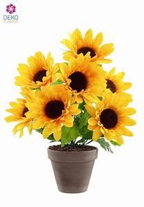 Sonnenblume Im Topf : sonnenblume im topf sonnenblume im topf rosenbote sonnenblume im topf bestellen zimmerpflanzen ~ Orissabook.com Haus und Dekorationen